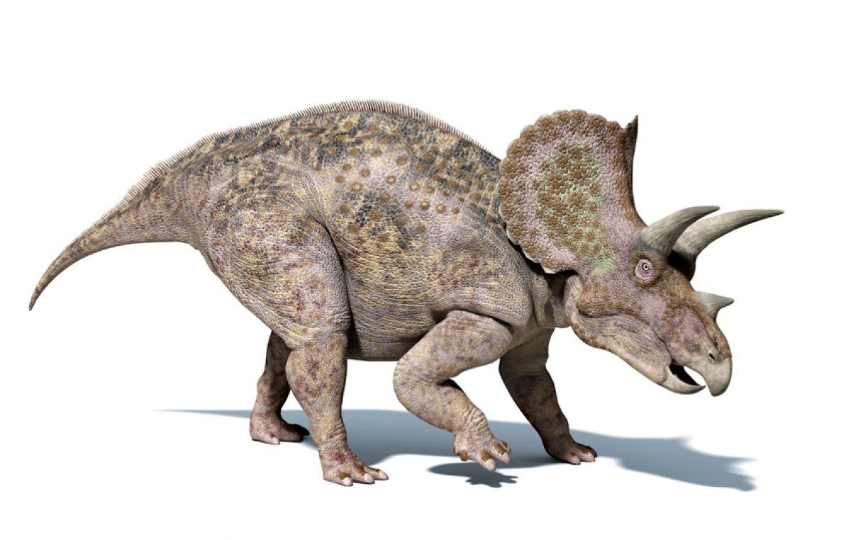 Ceratopsen