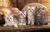 Kitten asiel