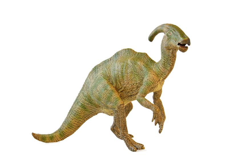 parasaur - informatie begin