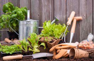 Tuinieren met groente planten