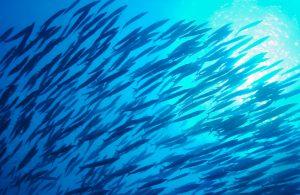 Beginnen met feedervissen op witvis