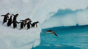 De pinguïn